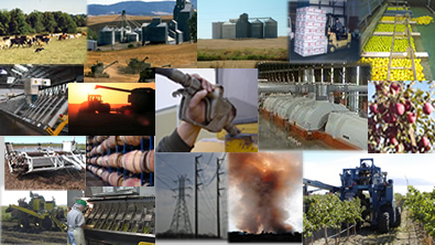 collage of Agribusinesses
